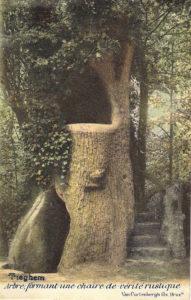 Preekstoel-boom in Arnolduspark (Belgie, West-Vlaanderen, Tiegem, Arnolduspark)