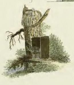 Toilet in boomstronk, Plaat CLXIV (Magazijn van tuin-sieraaden, G. van Laar)