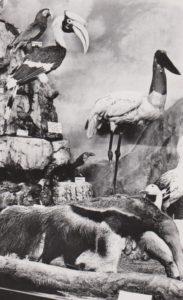Museum vogels aller werelddelen (Belgie, Booischot, Heist op den Berg)